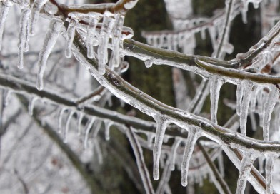 Electricity consumption during periods of intense cold weather
