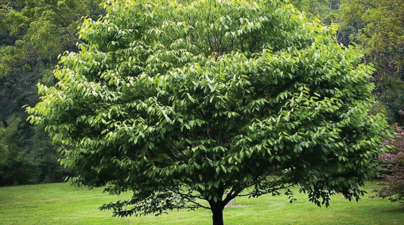Distribution spéciale d'arbres 2016