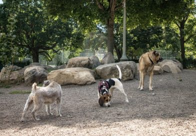 COVID-19: Temporary closure of all Dog Runs in Westmount