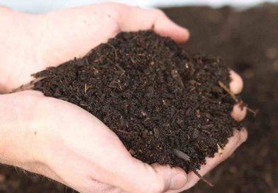 Compost gratuit pour les résidents de Westmount du 22 au 29 octobre au TAW